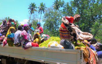 Appui à la Filière ylang-ylang aux Comores
