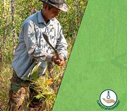 Prendre en compte les enjeux climatiques dans un projet de préservation des forêts ou de restauration d'écosystèmes forestiers