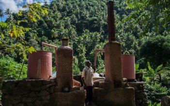 Allier écologie, économie et emploi: la filière huile essentielle d'Ylang Ylang aux Comores, une solution ?